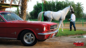 Ford-Mustang-1965-Arab-Motor-World-06